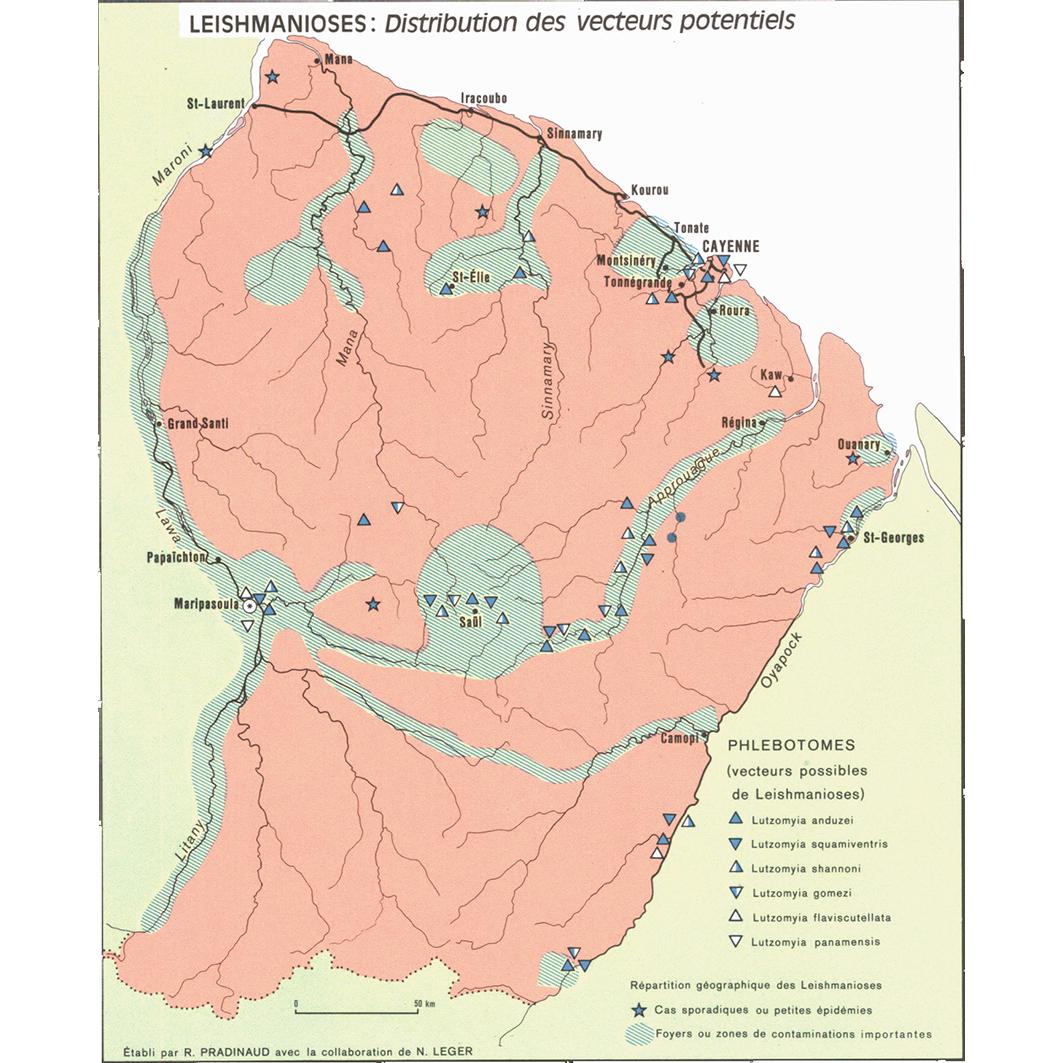 La Guyane : planche 16 : pathologie : leishmanioses : distribution des vecteurs potentiels